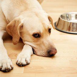 dog lying by a dog bowl