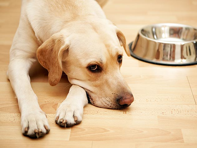 A Feeding Schedule for Your Dog