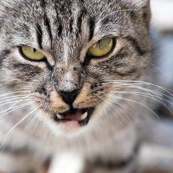 Resolving Feline Aggression Part 1