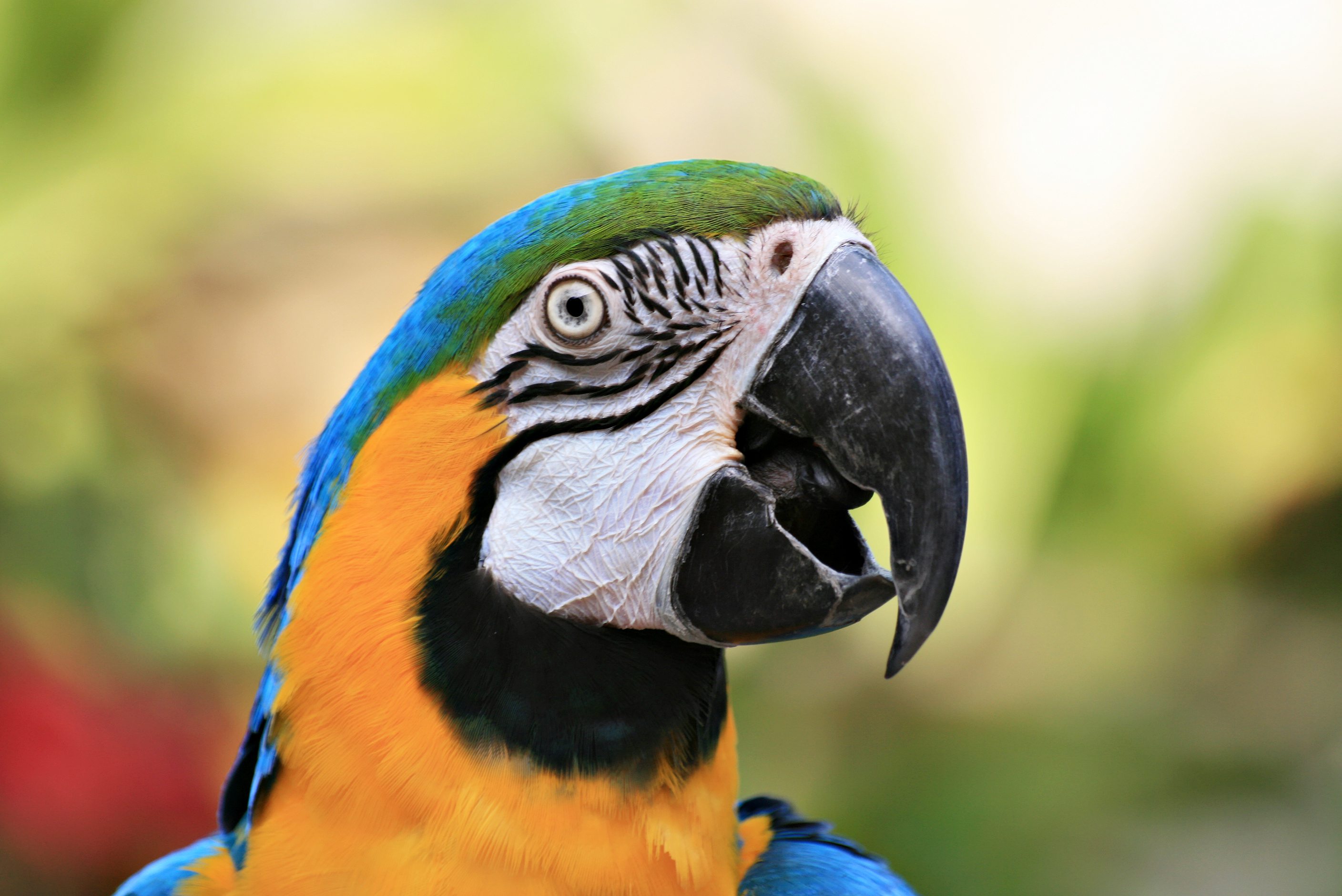 Why Does My Parrot Scream? | Petfinder
