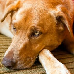 Roundworm and Your Dog