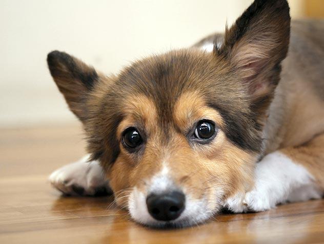 Dog Anal Gland Care