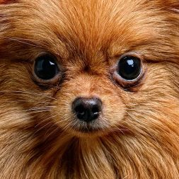 close up small dog face