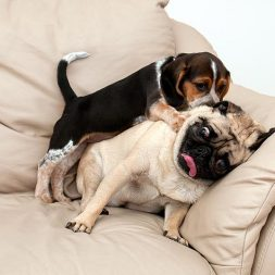 Behavioral Problems of Unneutered Male Dogs