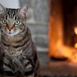 Cat Adoption Checklist