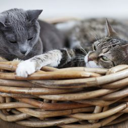 More tips for Introducing Two Cats