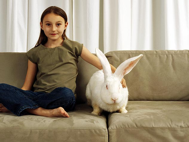girl and rabbit on couch