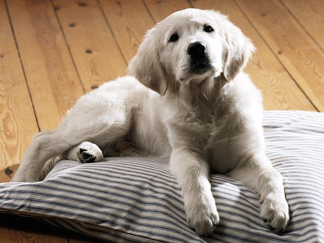 How Do I Get a Tick Off My Dog?