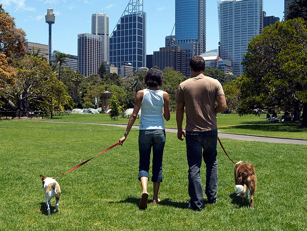people walking dogs in the park