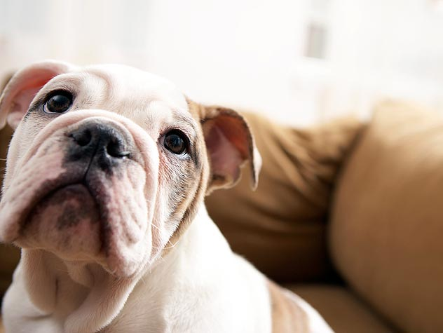 Preparing Your Home for a New Dog