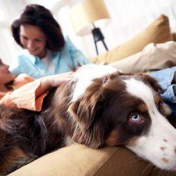 Dog-Friendly Decor