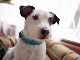Fostering Dogs | Petfinder