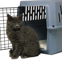 black cat sitting outside animal carrier