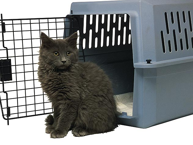 black cat sitting outside animal carrier