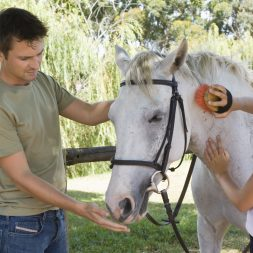 man and woman caring for horse