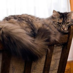 Treatments for Liver Disease in Cats