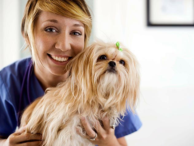 veterinarian with small dog