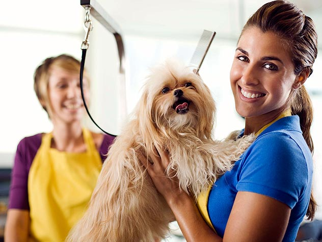 Getting Your Dog Used to Being Groomed