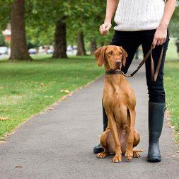Choosing a Pet Sitter