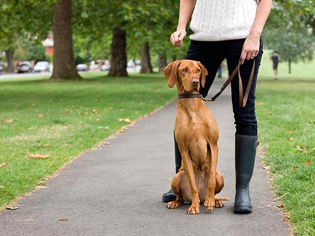 A woman walks a dog