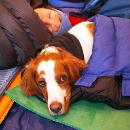 dog in a sleeping bag