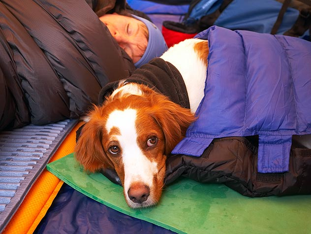 dog in a sleeping bag