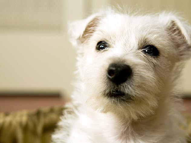 Why Prevent Heartworm?