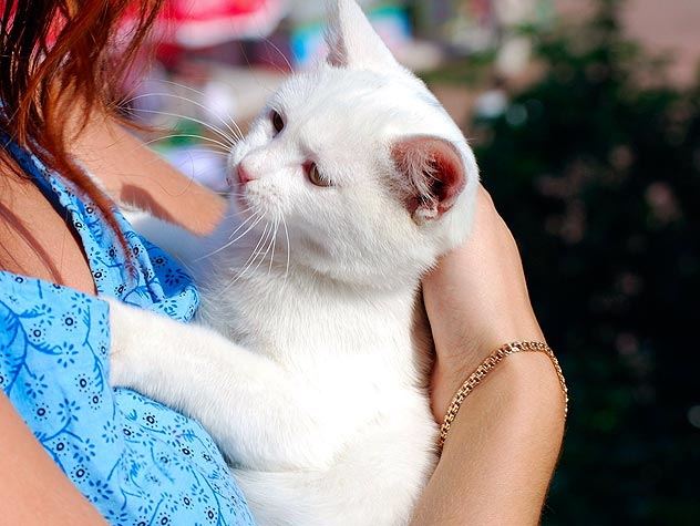 woman holding a white kitten