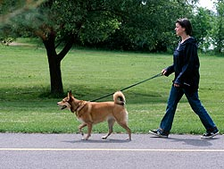 woman taking a dog for a walk