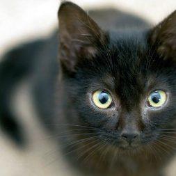 Feline Acne: Cats Get Zits Too