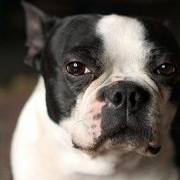 black and white dog