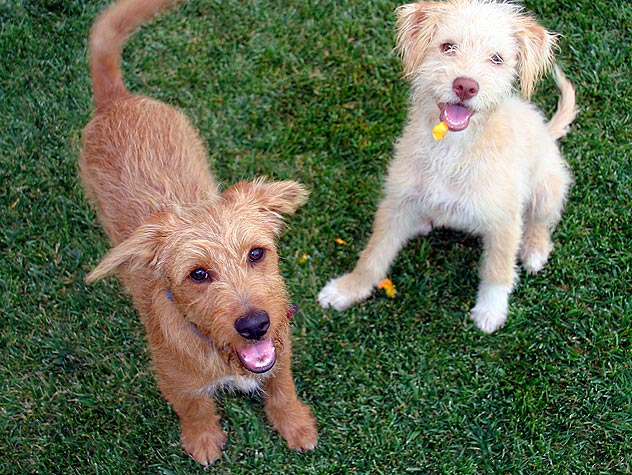 The Benefits Of Multiple Pets Petfinder