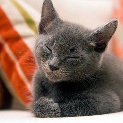 Kittens and Conjunctivitis