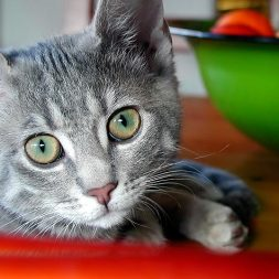 Questions to Ask Your Cat's Vet