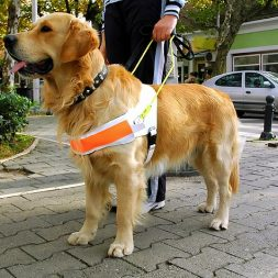 How Do Therapy Dogs Get Certified?
