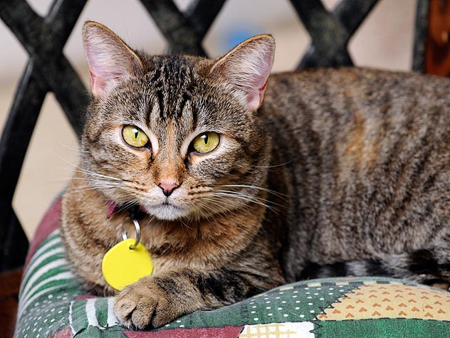 20 Questions to ask Before Your Foster a Cat