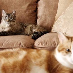 June is Adopt-A-Shelter-Cat Month. What Can I Do?