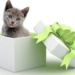 kitten in a gift box