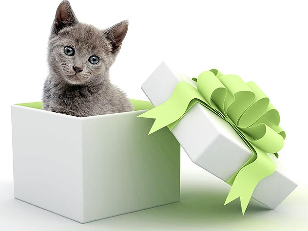 kitten in a gift box