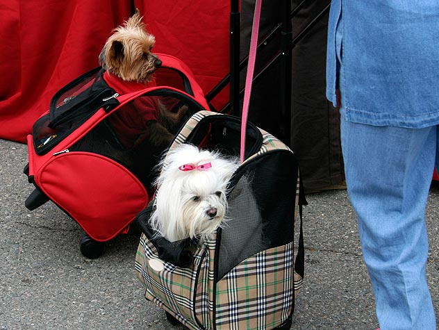 Petfinder's 2011 Most Pet-Friendly North American Airlines