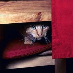 Improving Feline Socialization