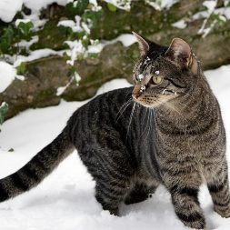 feral cat in snow