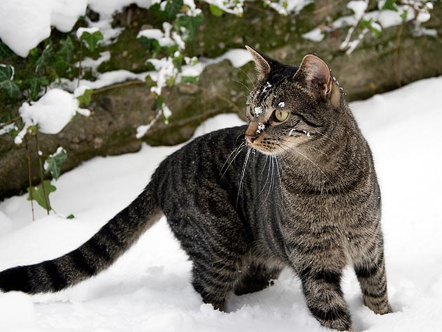 Winter Care and Safety for Feral Cats