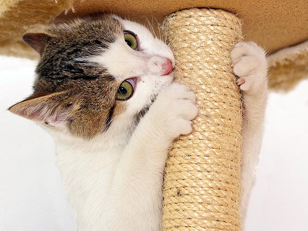 How to Choose a Scratching Post For Your Cat - Petfinder