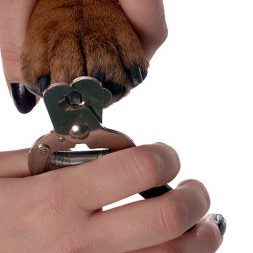 How to Trim a Dog's Nails: More Tips