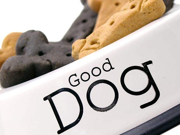 That's a Good Boy! Finding the Right Dog Treats
