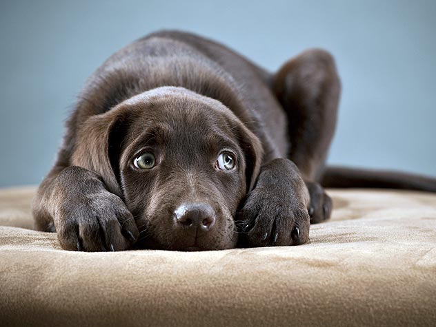 Lay Down the Law (What to do about animal protection laws in your state)