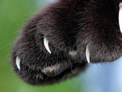 cat paw with claws
