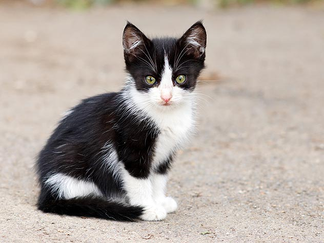 Caring for Litters of Stray Kittens