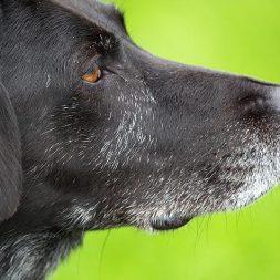 Animal Cruelty Taskforce Description